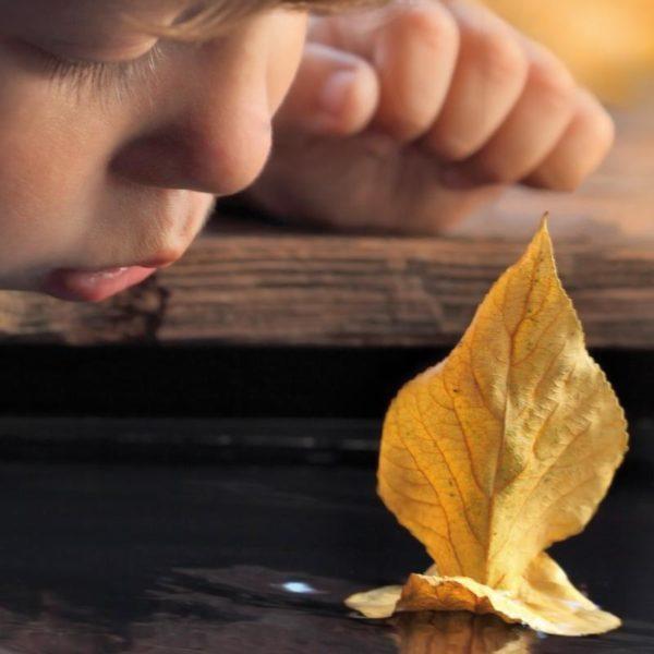 photo enfant soufflant sur une feuille comme un voilier